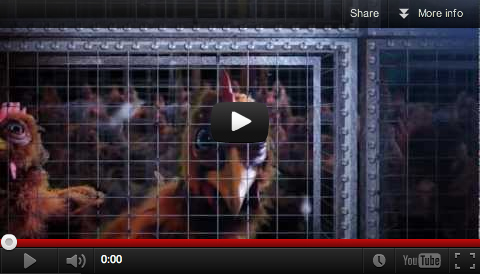 A Cage Is A Cage video clip