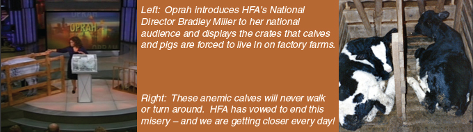 Key to HFA's success is the ability to generate major media attention. Left: Oprah introduces HFA's National Director Bradley Miller to her national audience and displays the crates that calves and pigs are forced to live in on factory farms. Right: These anemic calves will never walk or turn around.  HFA has vowed to end this misery – and we are getting closer every day!