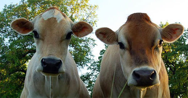 HFA - The Humane Farming Association